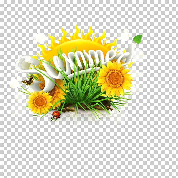 Common sunflower Summer solstice, Summer sunflower PNG.