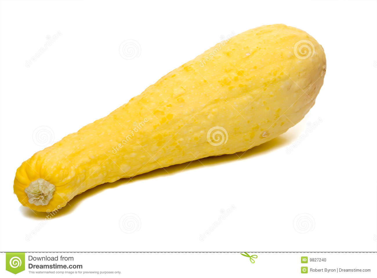 Organic Yellow Squash Stock Photos, Images, & Pictures.
