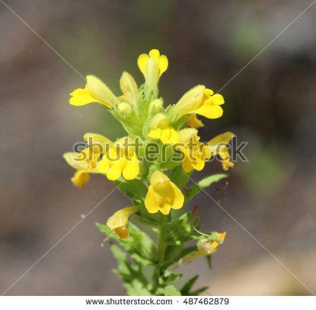"""""""ferny_foliage"""" Stock Photos, Royalty."""