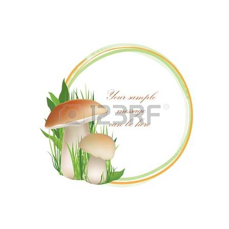 249 Truffle Mushroom Stock Illustrations, Cliparts And Royalty.