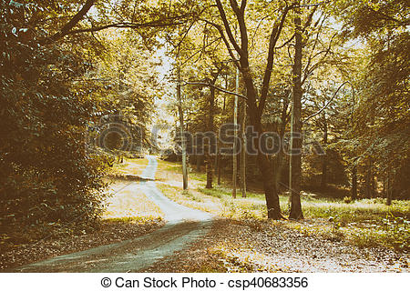 Stock Images of English woodland path with the sun breaking.