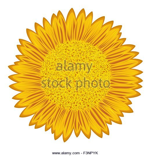 Flowering Stock Vector Images.