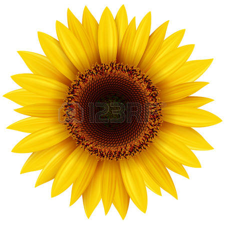 Sun flower clipart 20 free Cliparts