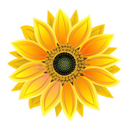 sun flower clipart clipground
