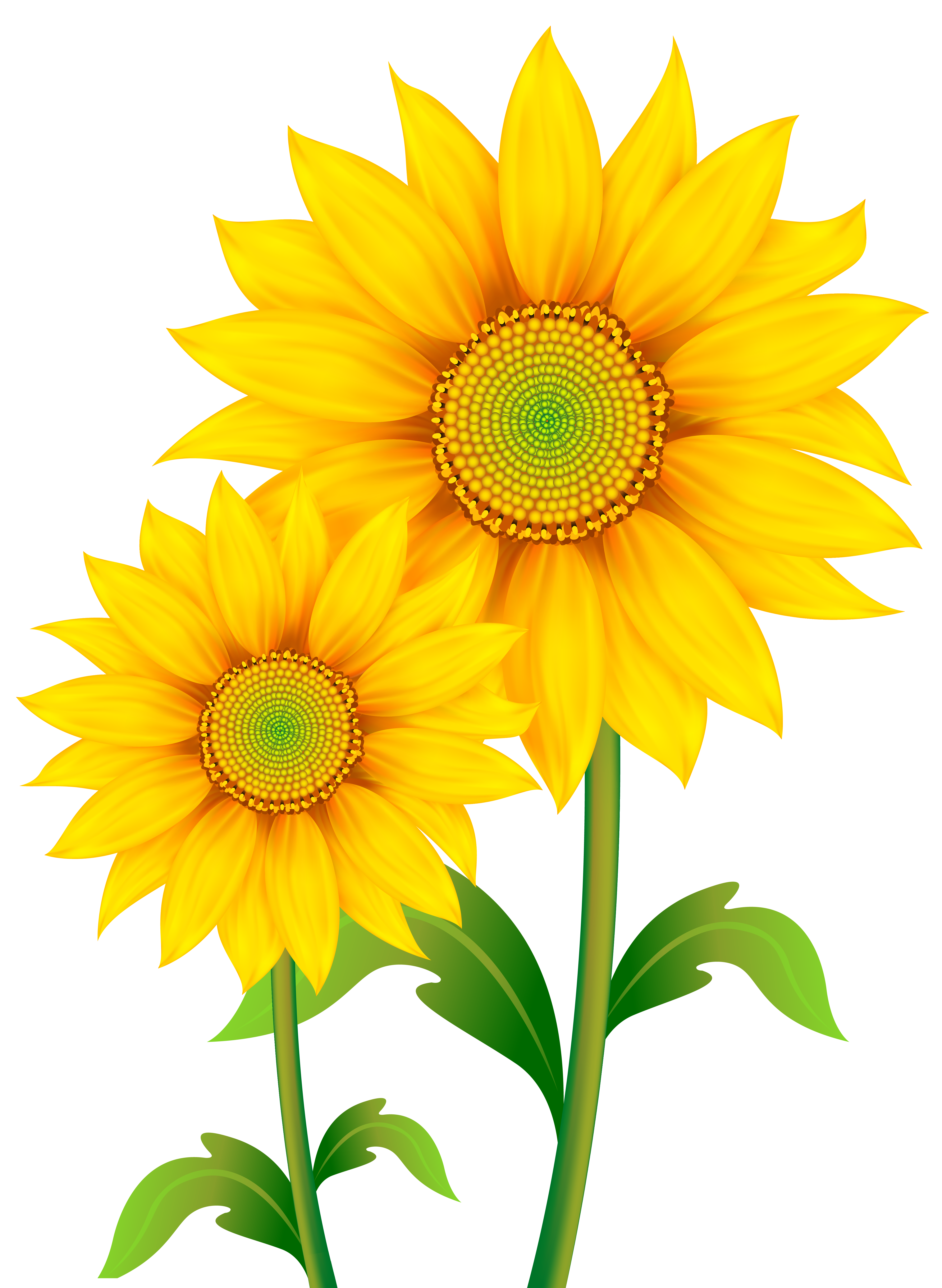 Transparent Sunflowers Clipart PNG Image.