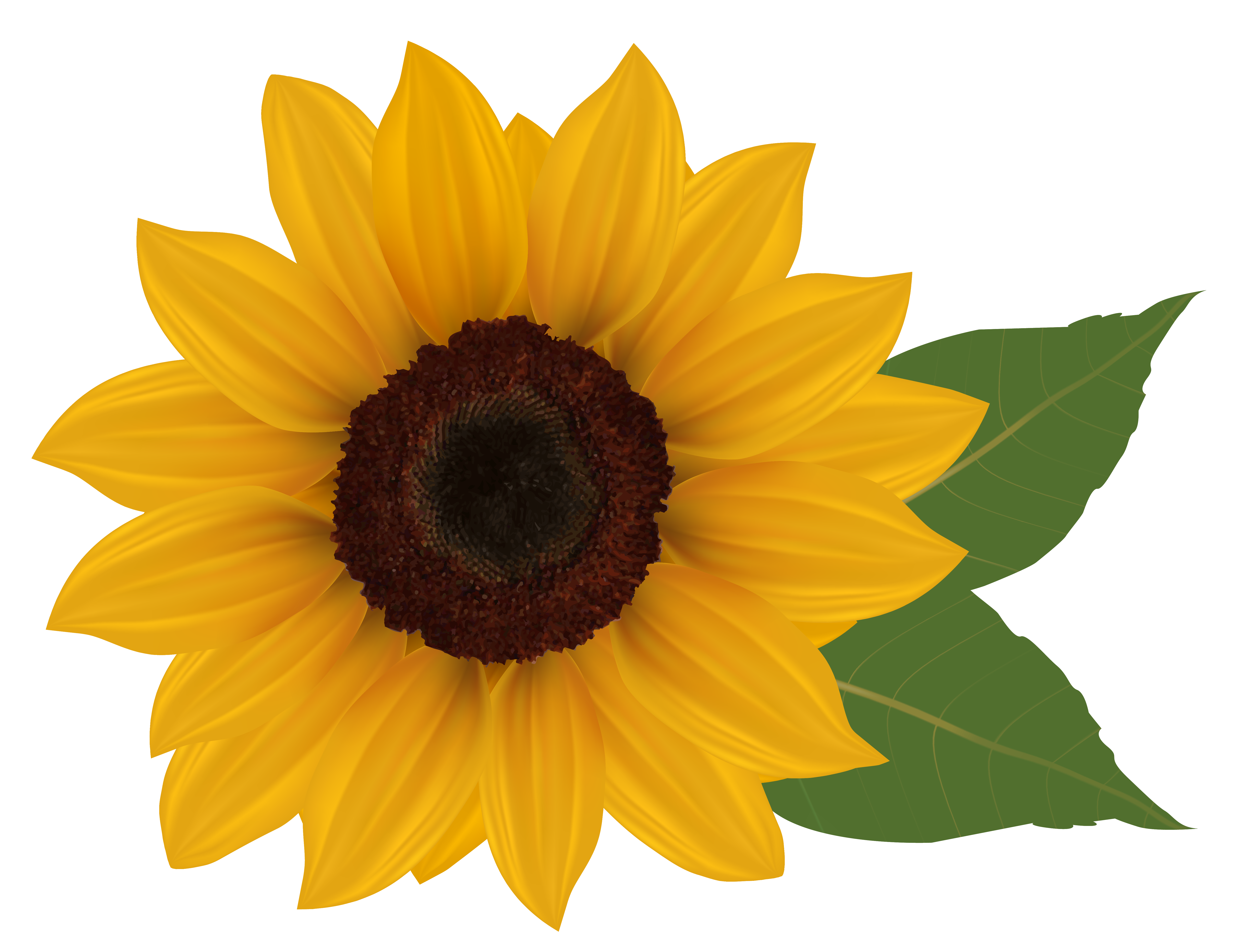 Sunflowers clip art.