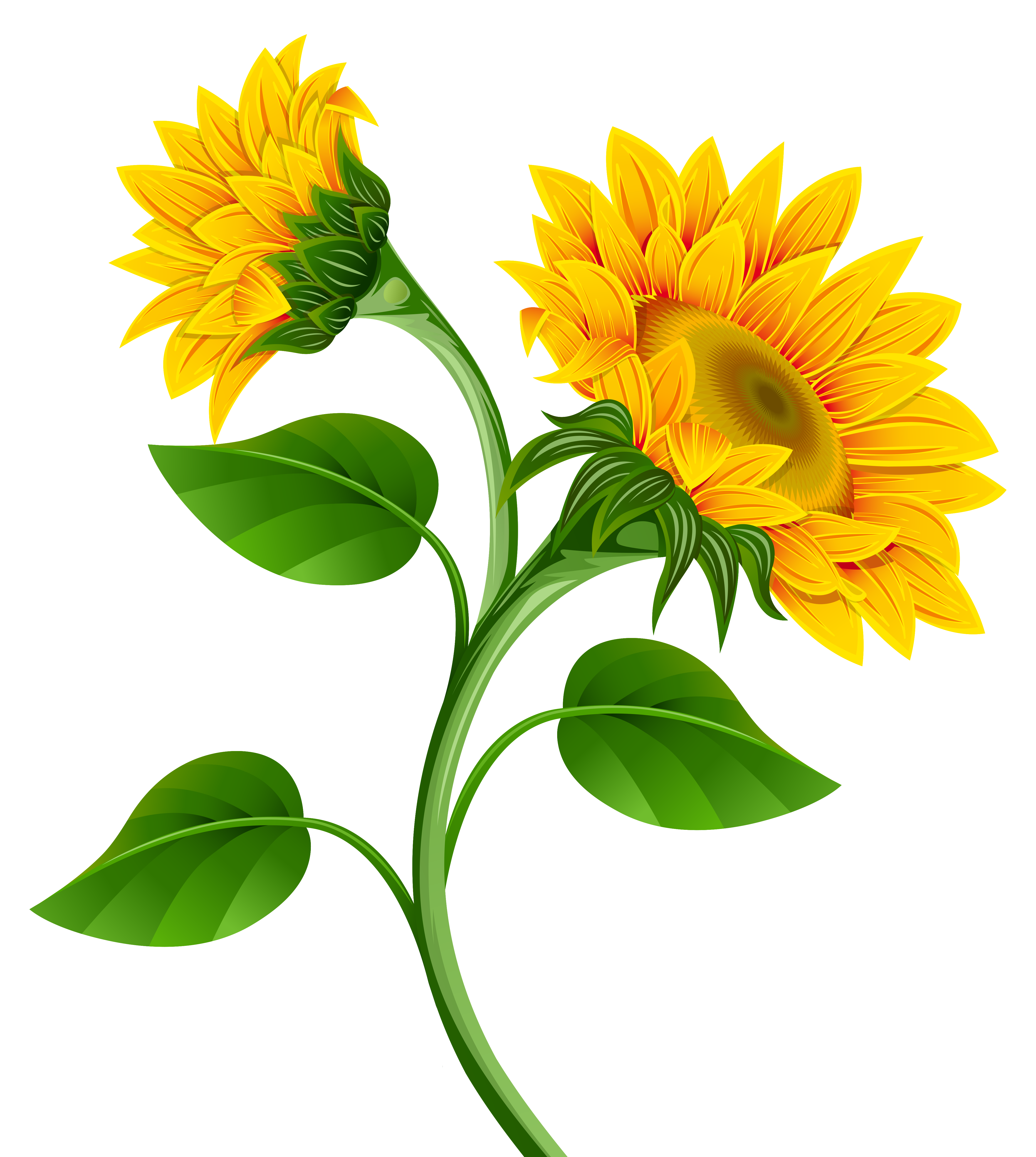 Sunflowers PNG Clipart Image.