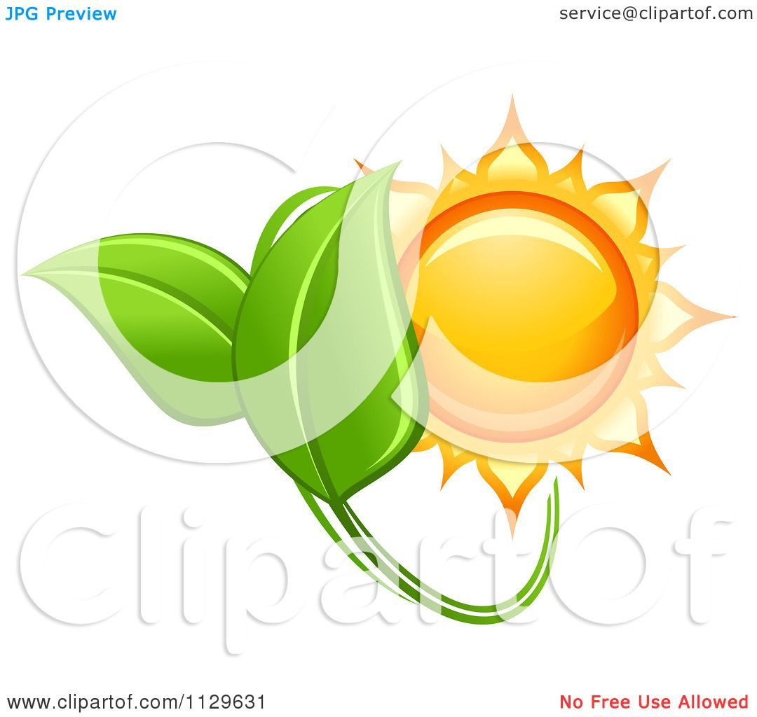 Clipart Of A Shiny Sun And Green Leaves.