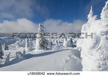 Stock Photo of Snow ghosts create an alien like landscape at the.