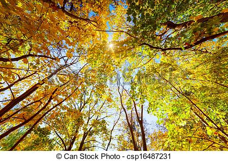 Stock Photos of Autumn, fall trees. Sun shining through colorful.