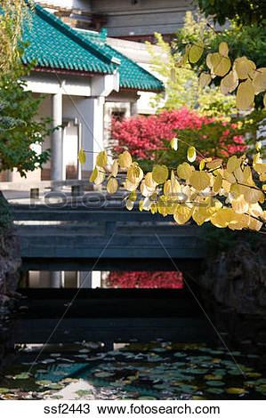Stock Photo of Heart Shaped leaves in fall color in front of Asian.