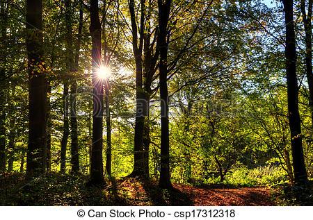 Stock Photography of Autumn woodland scene.