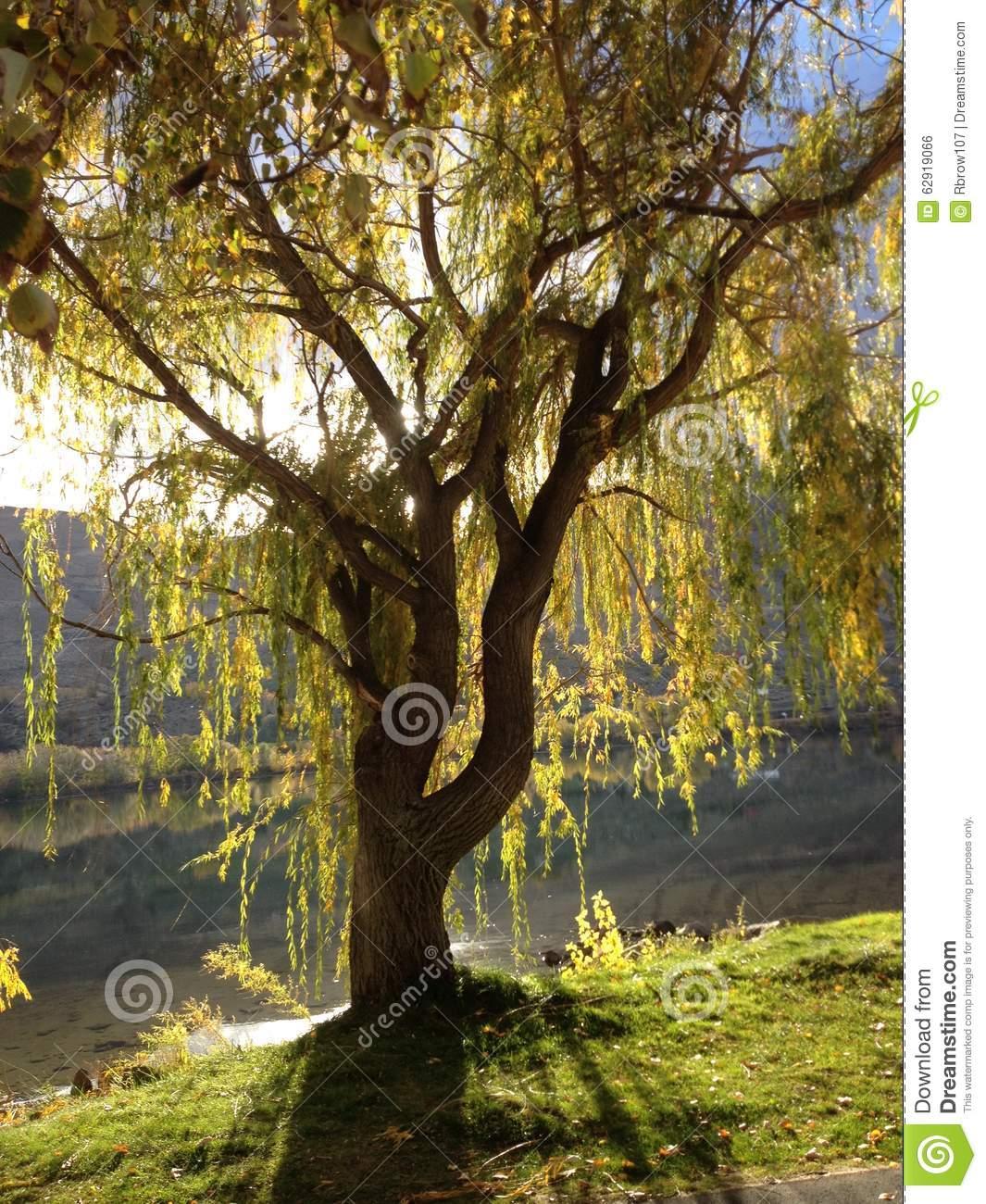 Sun Dappled Tree Stock Photo.