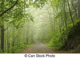Stock Photo of Woodland Trail Through Sun Dappled Forest.
