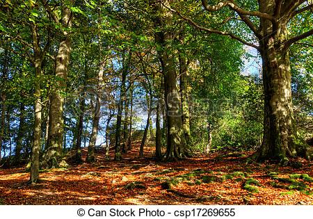Stock Images of Autumn woodland scene.