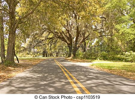 Stock Photographs of Road Under Sun Dappled Oaks.