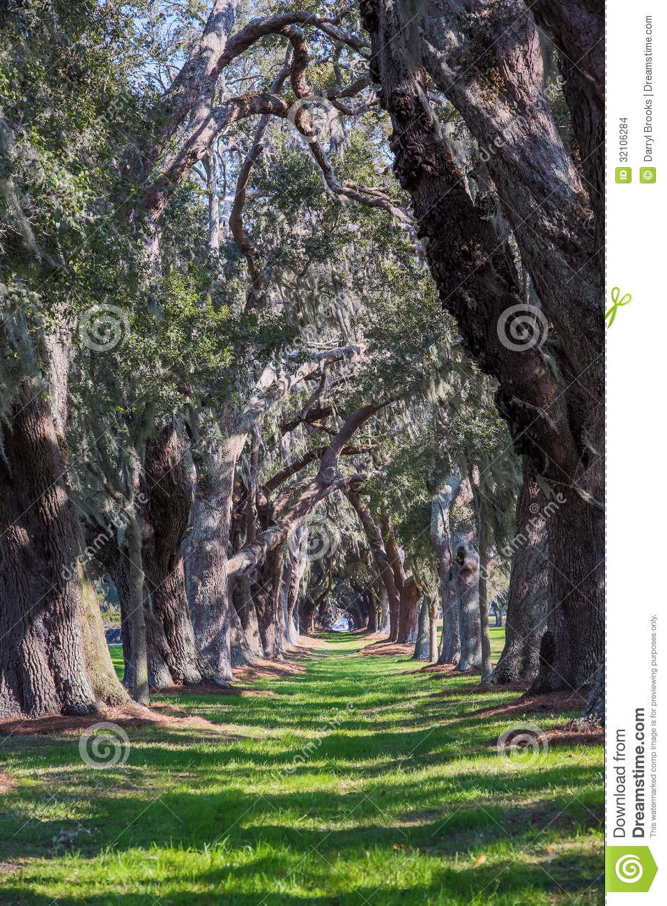Sun Dappled Path Through Oak Trees Stock Images.