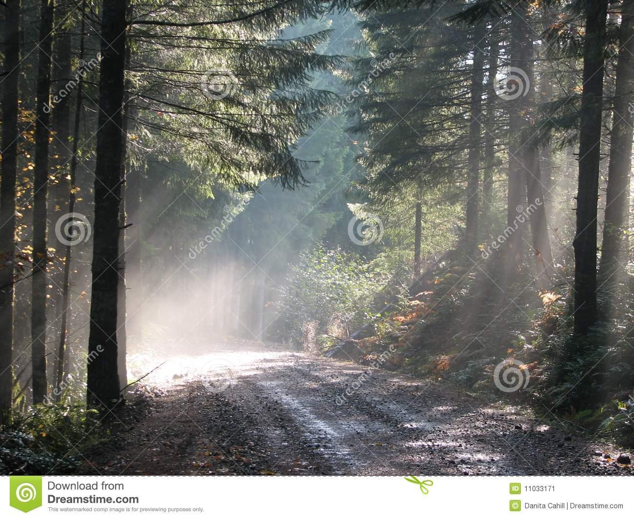 Sun Dappled Forest Stock Image.
