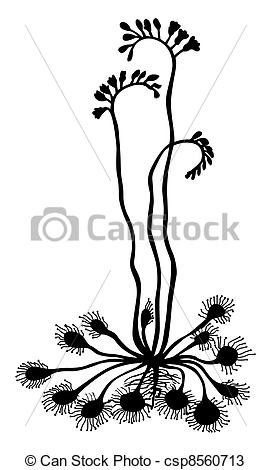 Drawings of silhouette sundew on white background csp8560713.