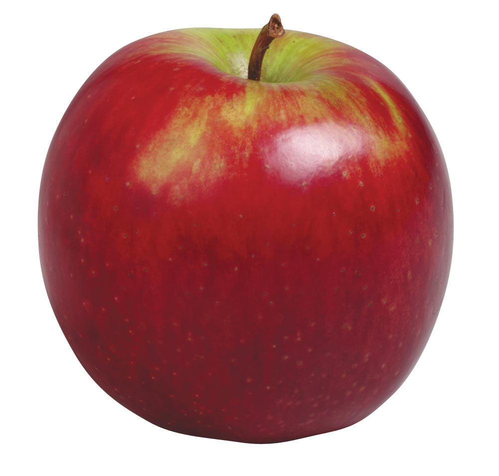 Real apple clipart.