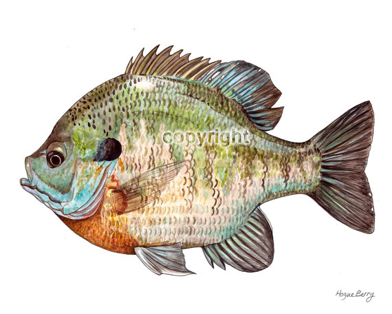 Great Clip Art of Freshwater Fish.