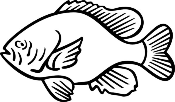Gallery For > Sunfish Clipart Black and White.