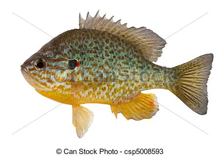 Sunfish Stock Photos and Images. 299 Sunfish pictures and royalty.