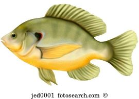 Sunfish Stock Photo Images. 353 sunfish royalty free images and.