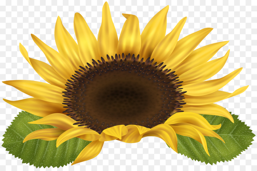 Sunflower Clipart.