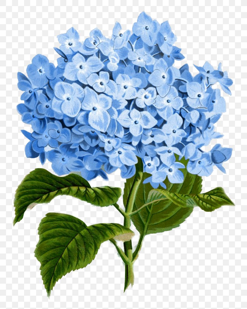 Hydrangea Paper Flower Botanical Illustration Clip Art, PNG.