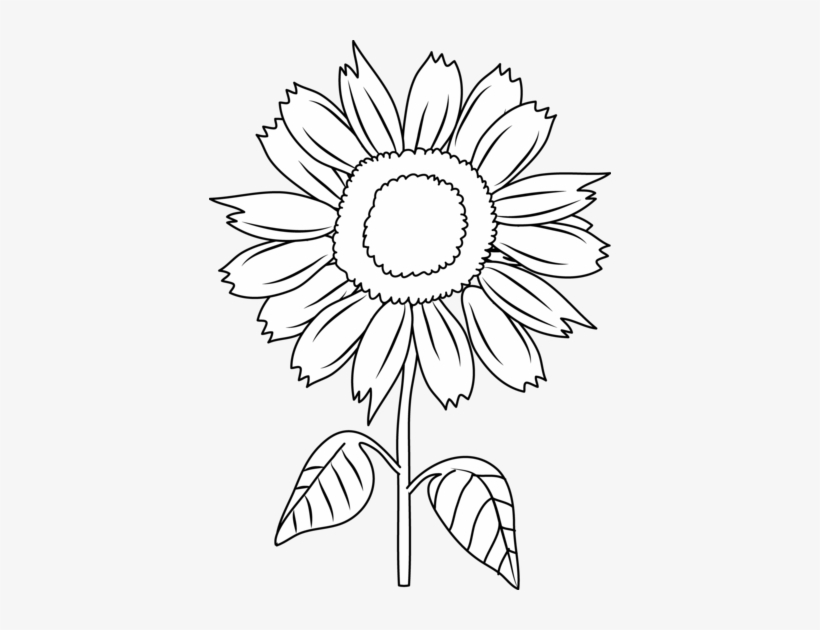 sunflower black and white clipart 10 free Cliparts ...