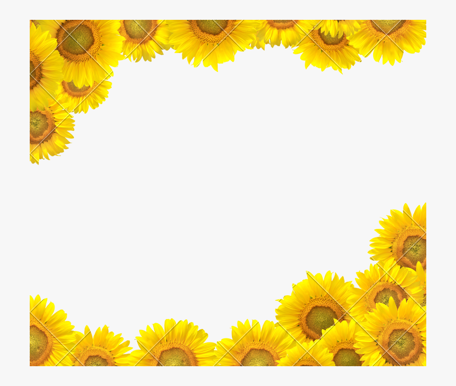 Sunflower Clipart Boarder.
