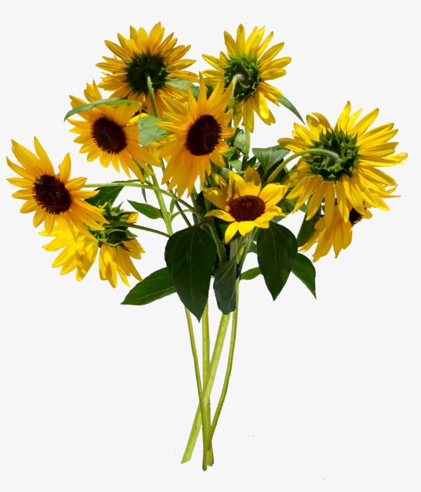 Sunflower Bouquet Png Stock By Annamae On Deviantart.