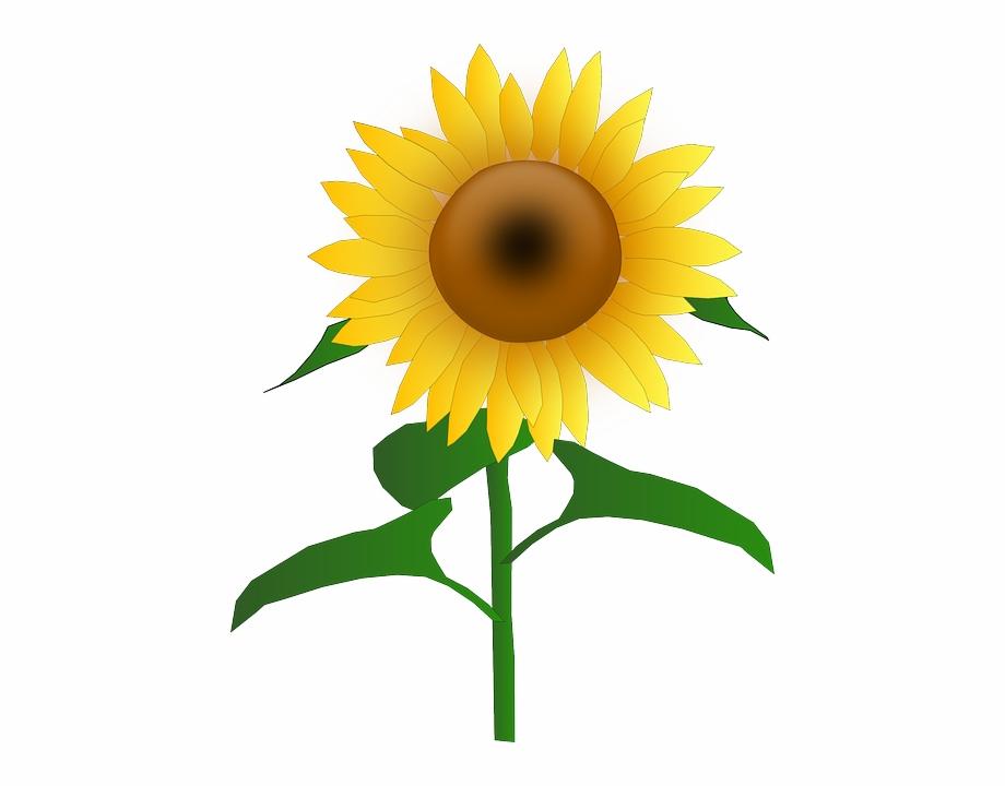 Sun, Flower, Cartoon, Border, Bloom, Plant, Sunflower.