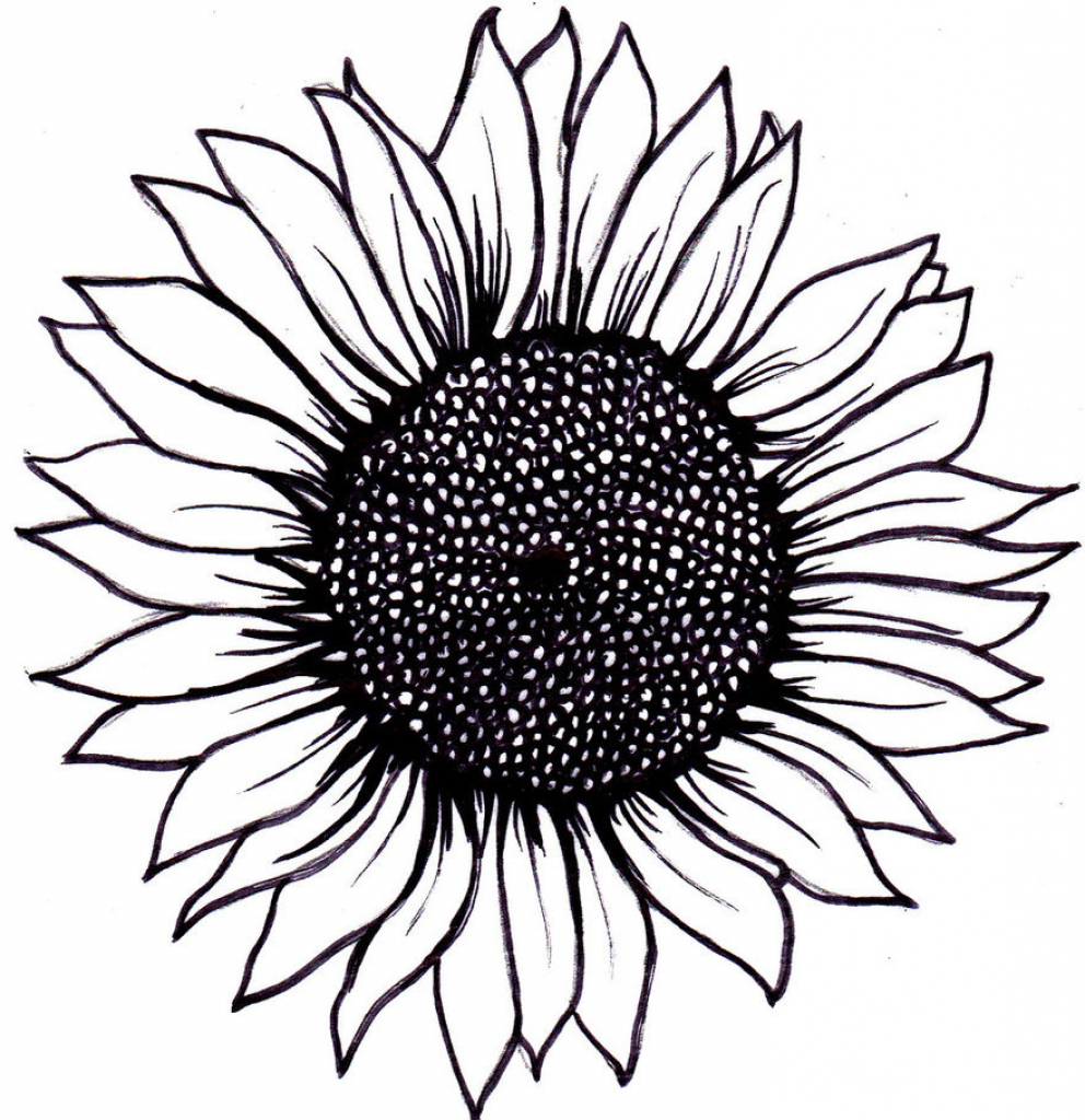 Sunflower Black And White Drawing at PaintingValley.com.