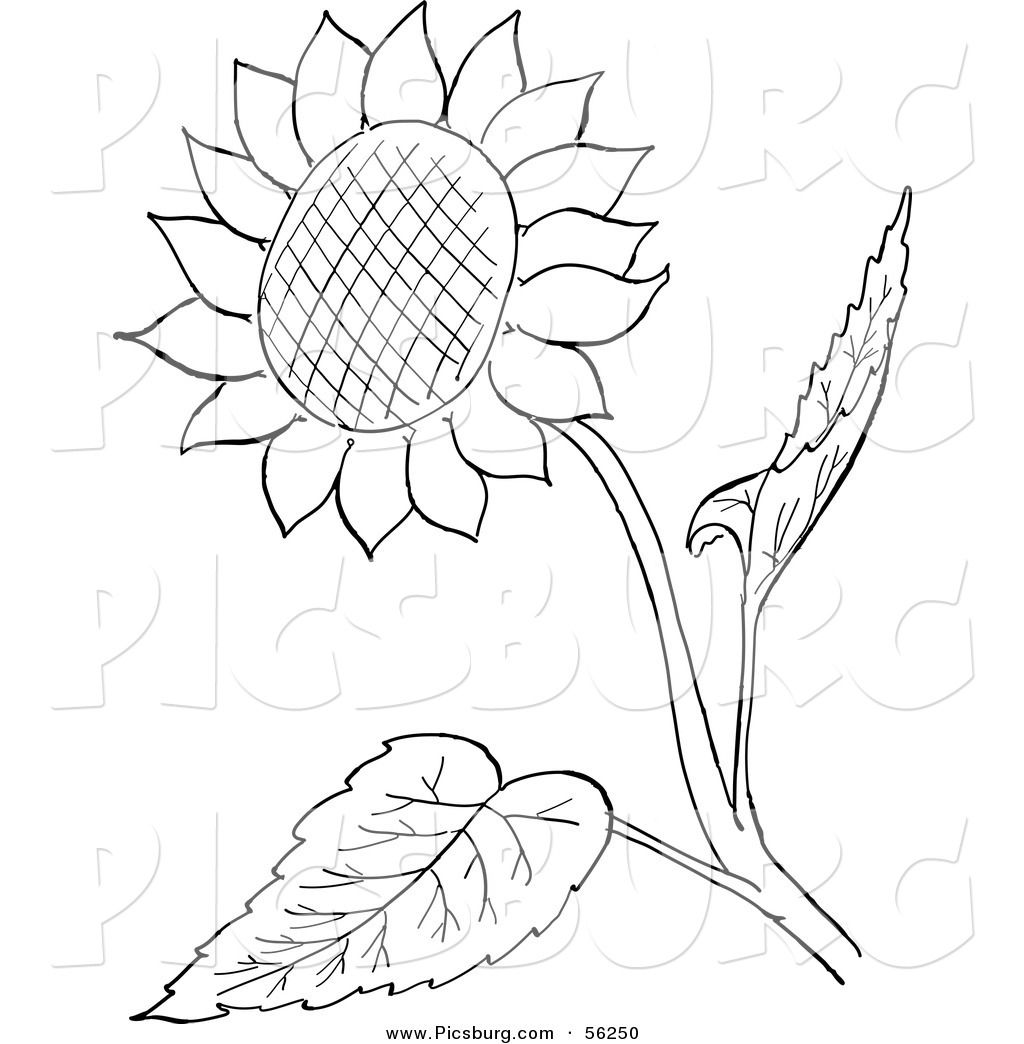 Clip Art of a Sunflower and Leaves.