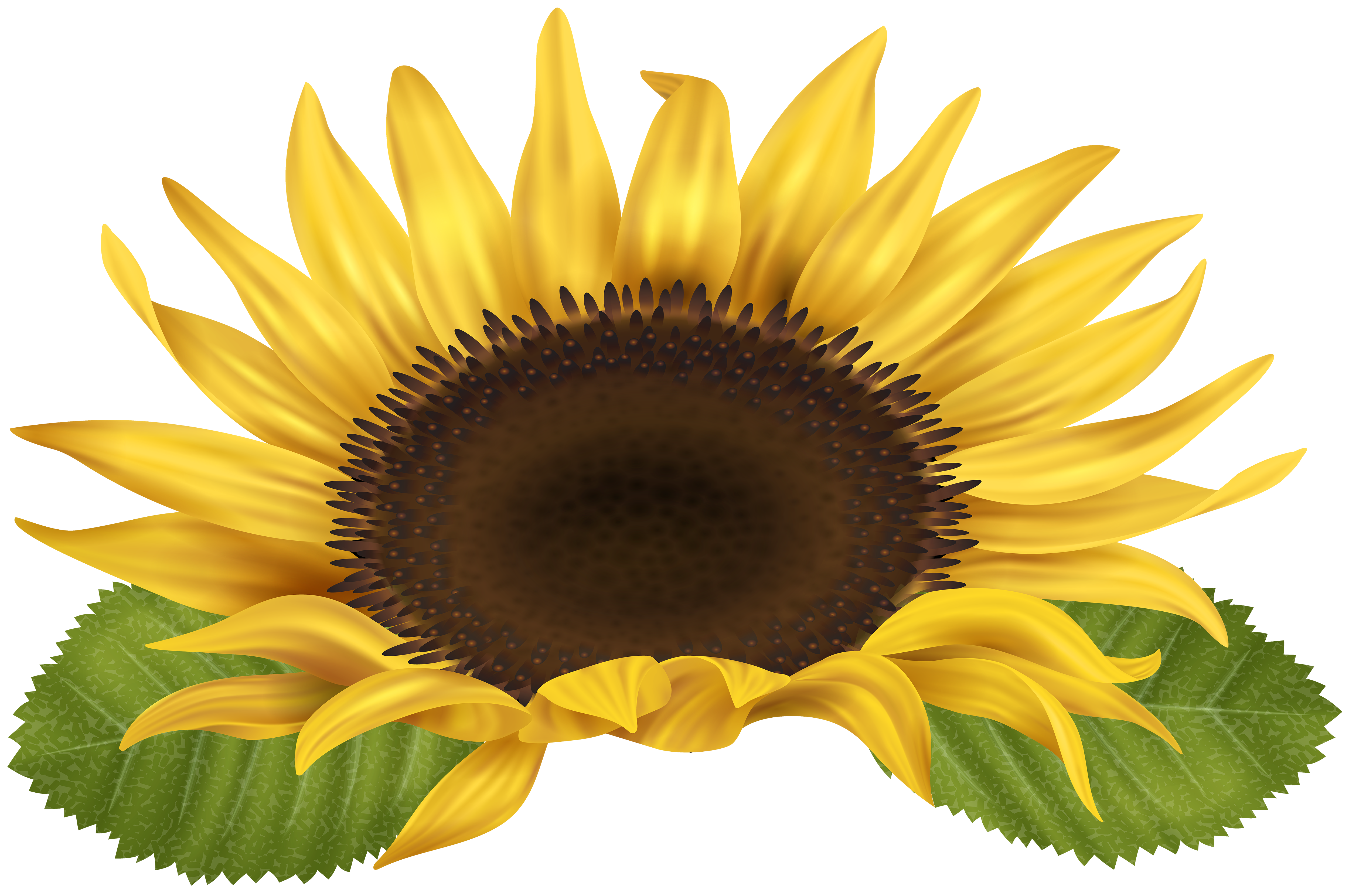 Sunflower PNG Clip Art Image.