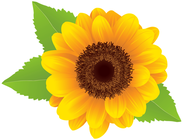 Sunflower clipart free images.
