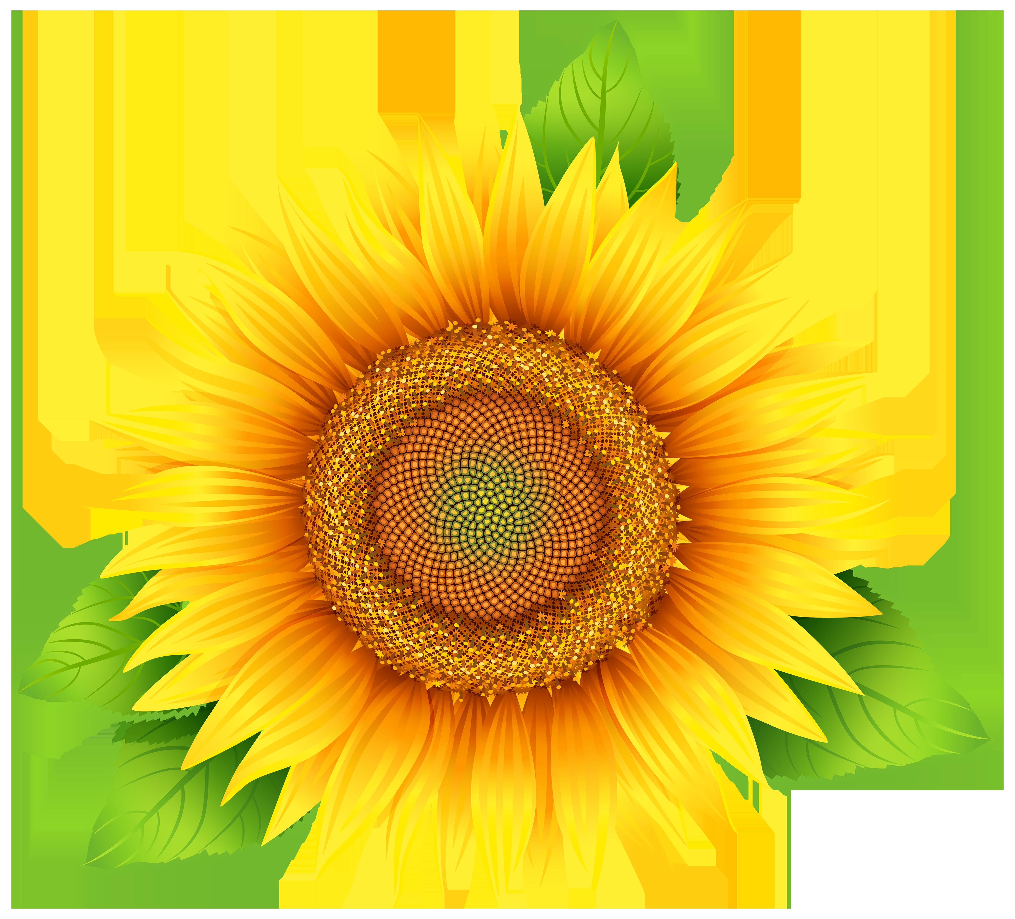 Sunflower clip art at vector clip art clipartbold 2.