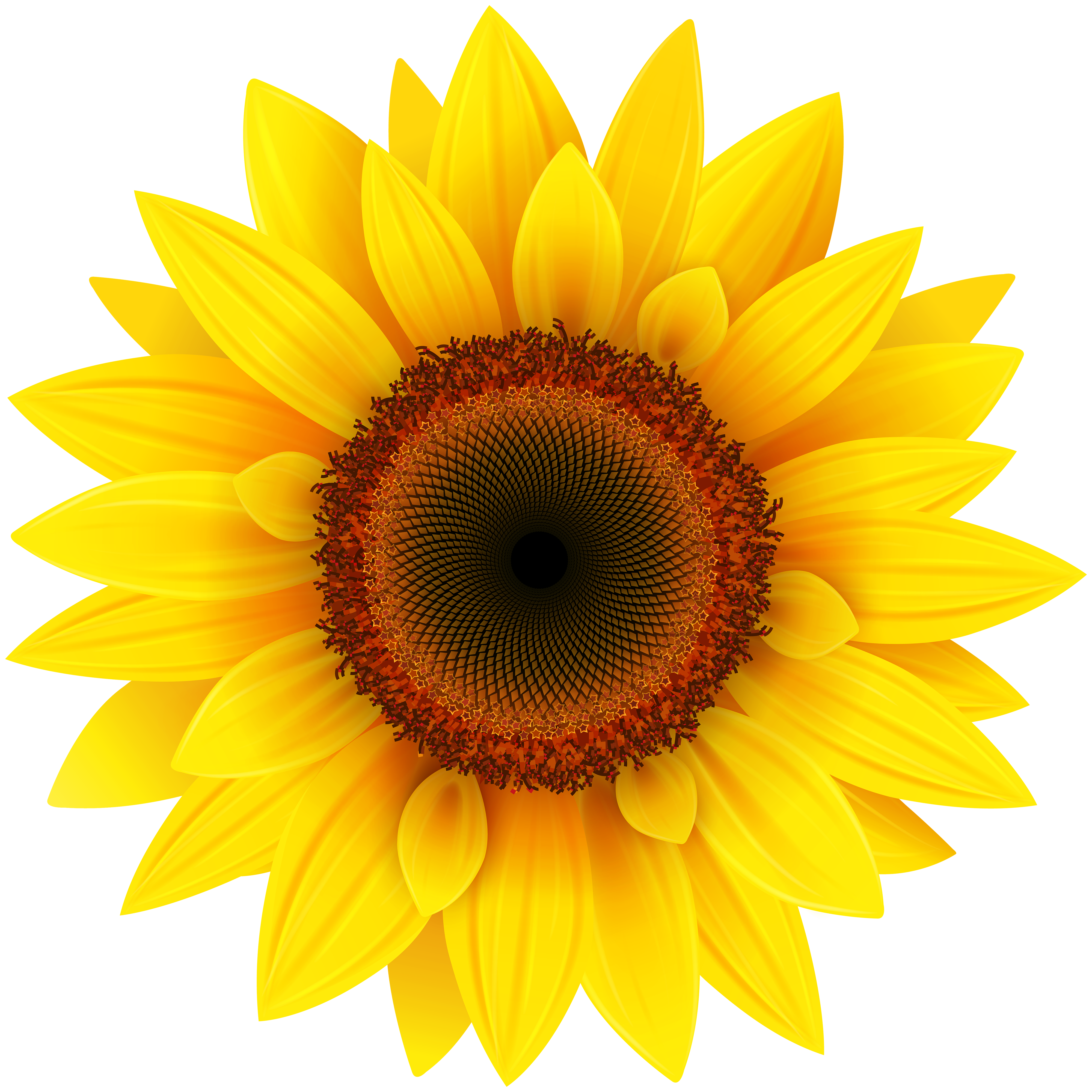 Sunflower clipart - Clipground