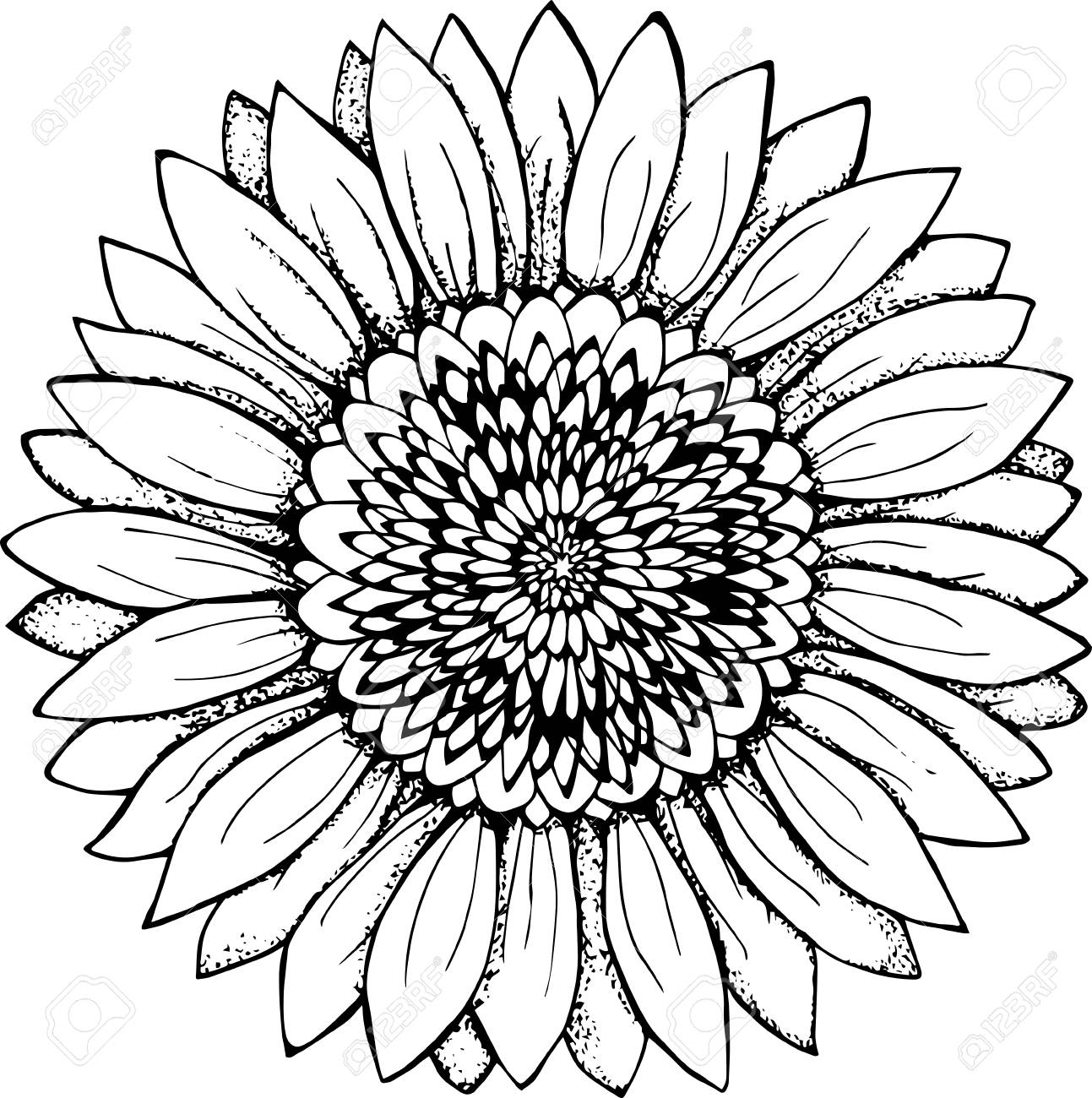 2419 Sunflower free clipart.