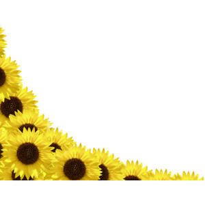 Free Sunflower Border Cliparts, Download Free Clip Art, Free.
