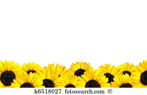 Boarder clipart sunflower, Boarder sunflower Transparent.