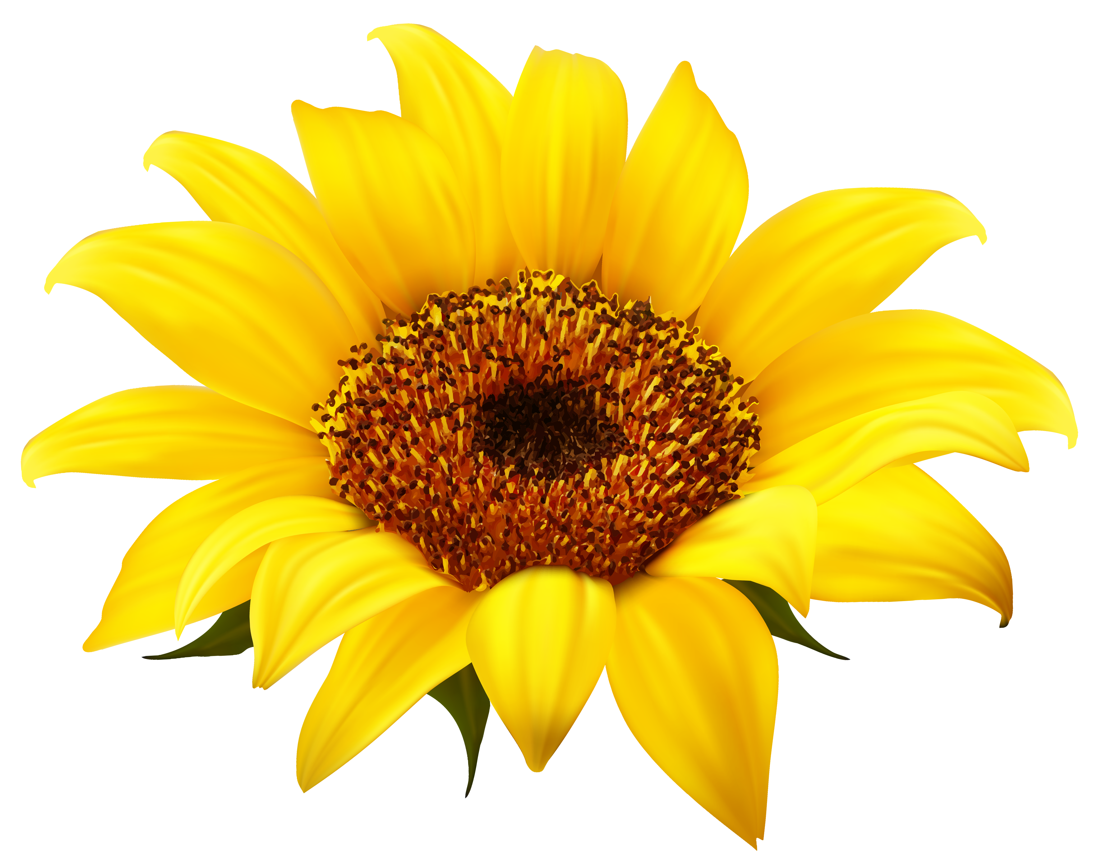 Sunflower Clipart PNG Image.