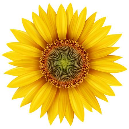 Free Sunflower Clipart Free Download Clip Art.