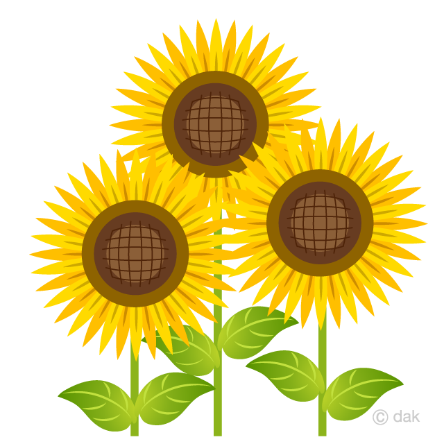 Free Bright Three Sunflower Clipart Image|Illustoon.