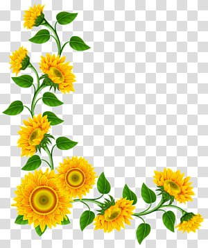 Sunflower Border PNG clipart images free download.