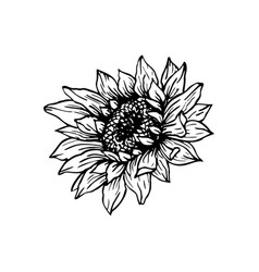 Sunflower Clipart Vector Images (over 270).