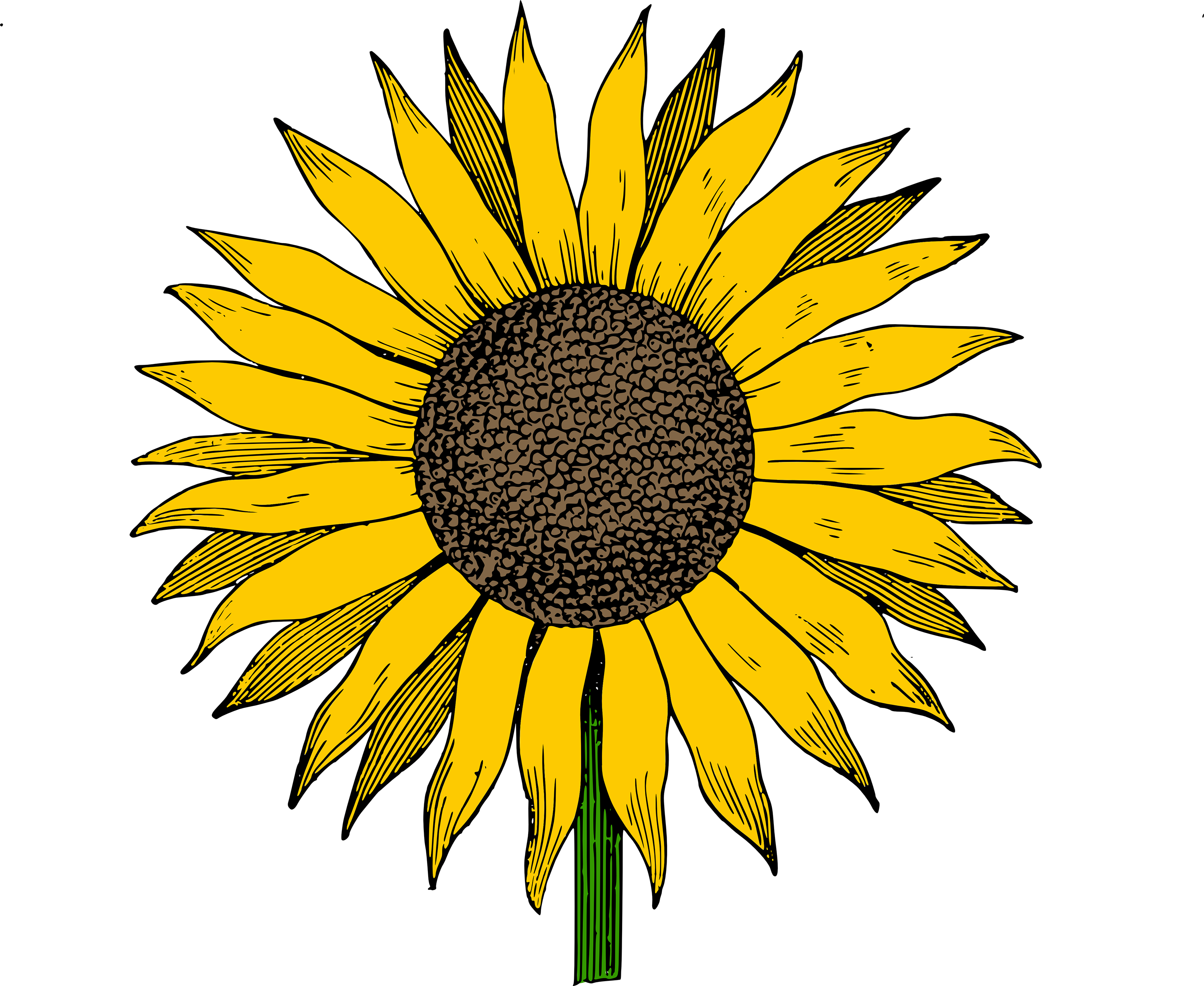 Sunflower vector png, Sunflower vector png Transparent FREE.