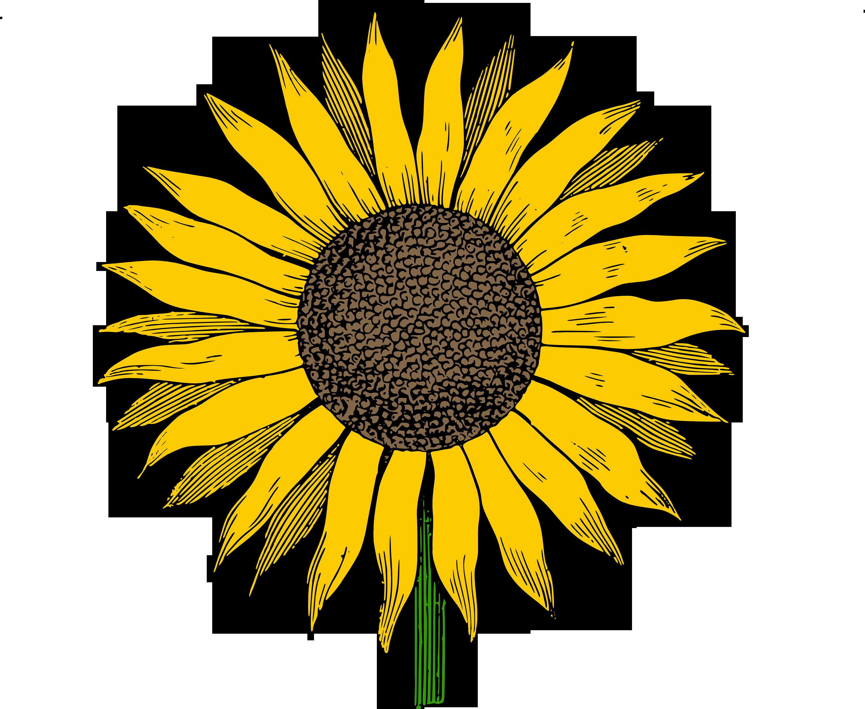 Sunflower vector png, Sunflower vector png Transparent FREE.